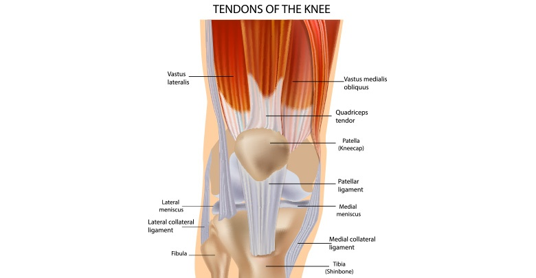 Pain around the front knee cap may be caused by many parts of the knee